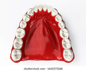 Model lower jaw top view. 3D illustration