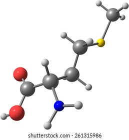 A model of a molecule of methionine, an essential amino acid. Amino acids are the building blocks of proteins and have many functions in metabolism
