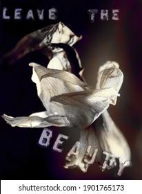 L'art moderne. La fleur brulée blanche et l'écriture Beauté. Rendu 3D