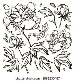 modern graphic set of peony flowers. suitable for backgrounds, clothes, postcards