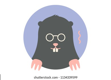 Mole. Icon of black Mole. Portrait in flat graphics - mole on colorful circle background. Illustration