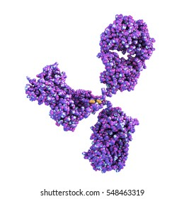 Molecular model of antibody taking part in immune defence. Molecule of immunoglobulin isolated on white background, 3D illustration