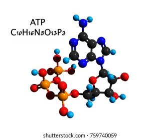 Molecular structure of adenosine triphosphate (ATP), a complex organic chemical