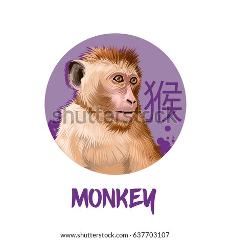 Monkey chinese horoscope character isolated on white background. Symbol Of New Year 2028. Funny animal in round circle with hieroglyphic sign, digital art realistic illustration, greeting card design