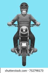 Monkey rides motorcycle. Hand-drawn illustration.