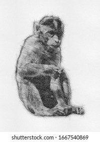 Monkey Simians Family Animal Drawings. Wild Gorilla Infraorder Simiiformes Pencil Sketch Abstract Painting. Chimpanzee Draw. Wallpaper Background Design. Wall Art. Canvas Painting Best for Home Decor