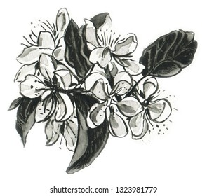 Monochrome drawing of flowers of an apple-tree.   Hand-drawn illustration.  Watercolor.