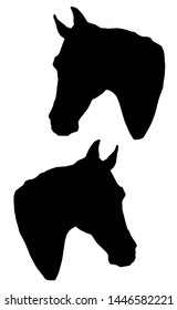 monochrome isolated image of the heads of two black thoroughbred horses