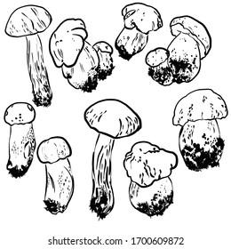 Monochromic sketch mushrooms. Autumn edible mushroom, healthy food, vintage,  raster illustration. Forest types of mushrooms collection. Isolated graphic, line, spot. Mushroom edible, healthy food