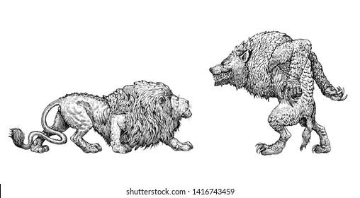 Monster illustration. Nemean lion and werewolf anatomy comparison. Fantasy drawing.