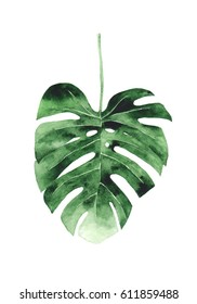Monstera Leaf Watercolor