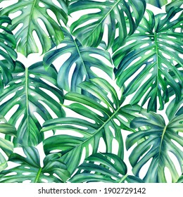 Monstera leaves on isolated background, watercolor hand painted floral illustration , seamless pattern, jungle design