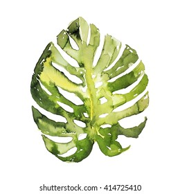 Monstera palm tree leaf isolated watercolor