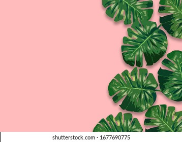 Monstera plant leaves,clipping path included.Flat lay, top view