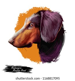 Montenegrin mountain hound, dog of crnogorski planinski gonic breed digital art illustration. Pet from Montenegro called Yugoslavian. Animal with smooth coat, hunting and working doggy canine