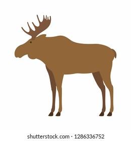 Moose. isolated on white background
