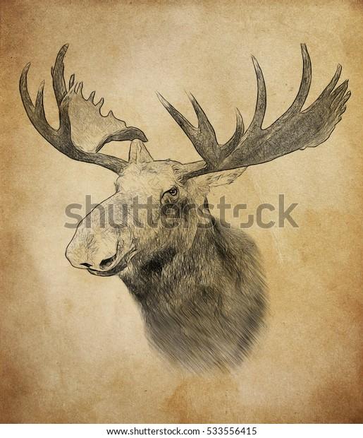 Moose on vintage background. Illustration in draw, sketch style