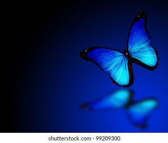 Butterfly Dark Images Stock Photos Vectors Shutterstock