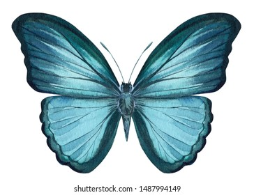 Morpho butterfly on an isolated white background, watercolor illustration, hand drawing, painting