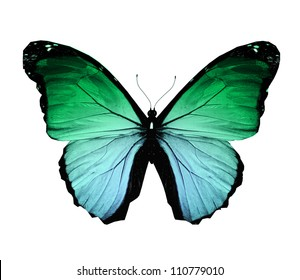 Morpho green butterfly , isolated on white