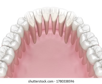 Morphology of human teeth. Medically accurate tooth 3D illustration