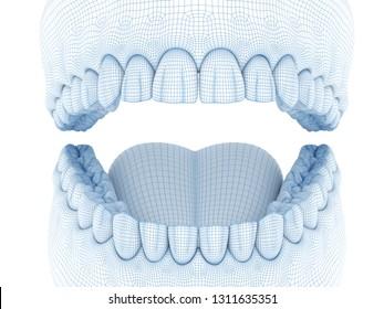 Morphology of mandibular human gum and teeth. Wire 3d model illustration