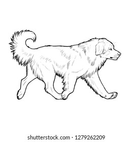 Moscow Watchdog. Hand drawn illustration with russian dog breed.