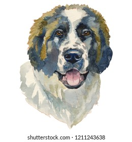 The moscow watchdog. Hand painted, isolated on white background watercolor dog portrait.