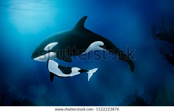 mother orca with her baby underwater