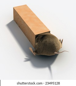 Mouse or rat trap seen from bottom up