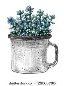 Mug with small turquoise succulent. Sedum stonecrop plant in hand drawn vintage metal cup