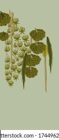 Mughal Plant and vintage tree manual Illustration artwork olive green background