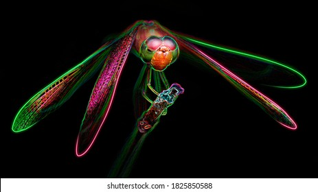 multicolored dragonfly on its perch, macro photo of this gracious and fragile predator with wide wings and big faceted eyes, nature scene, digital neon light effect, black background, Thailand