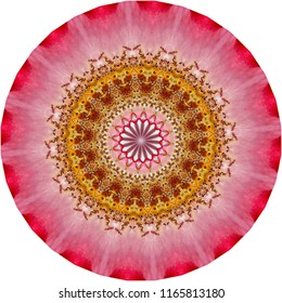 Multicolored red, orange,  pink mandala with textured pattern on white background. Decorative element, ethnic design, web design, anti-stress therapy, meditation.