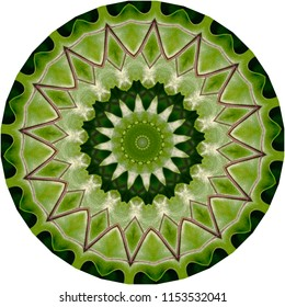 Multicolored shades of green, white, tan, brown mandala on green background. Decorative element, ethnic design, web design, anti-stress therapy, meditation.