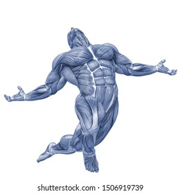 muscle man anatomy in an white background, 3d illustration