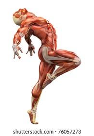 muscle man ballet 2