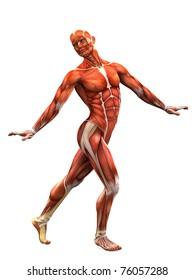 muscle man ballet