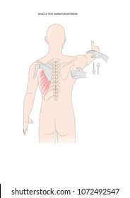 muscle test: testing the serratus anterior. Test used in kinesiology, neurology, physical therapy