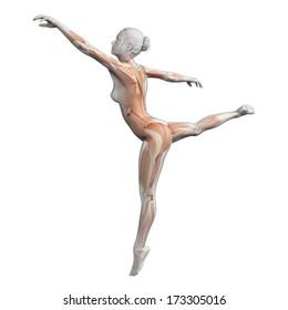 muscles of a female ballet dancer
