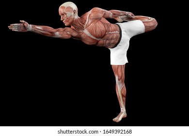 維持するためのヨガの位置にある筋肉質の男性(解剖学的な視覚)
