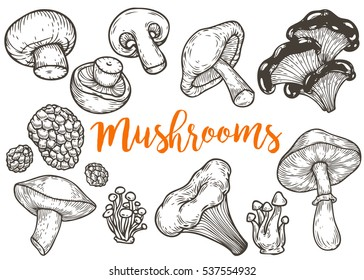 Mushroom hand drawn sketch illustration. Mushroom shiitake, truffle, chanterelle, champignon, enokitake, honey agaric, oyster mushroom, fresh organic food isolated on white.