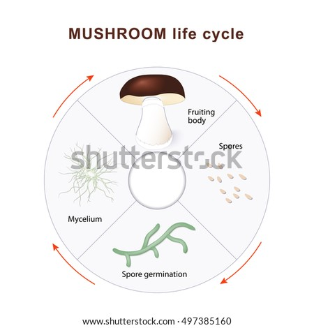Ascaris asexual reproduction in fungi