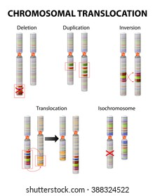 Mutation. Chromosome abnormality: deletions, duplications, translocations, inversions, insertions and isochromosome.