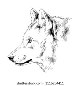 muzzle of the wolf hand-painted ink tattoo sketch
