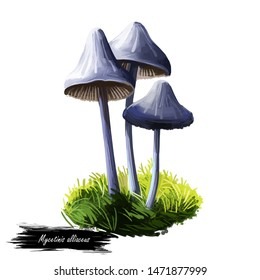 Mycetinis alliaceus mushroom digital art illustration. Marasmius garlic parachute type of vegetable, natural organic plant realistic drawing with inscription. Watercolor print of nature veggie