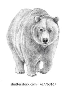 Mysterious and glorious, Hand drawn pencil illustration of a walking bear