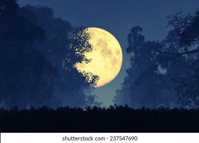 Mysterious Magical Fantasy Fairy Tale Forest at Night in the Full Moon light 3D artwork