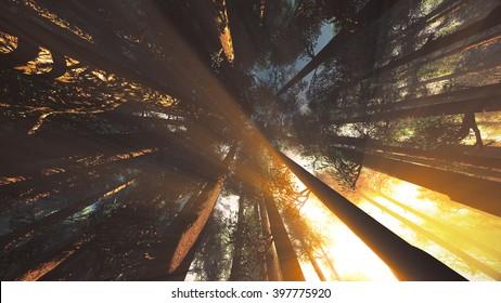 Mystic Fantasy Woods Lightrays Low Angle 3D Illustration