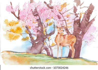 Nara city sketch. A deer at Nara park ( world heritage site ) with cherry blossom. Hand drawn watercolor painting.